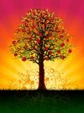 De boom van de appel in de avond Stock Fotografie