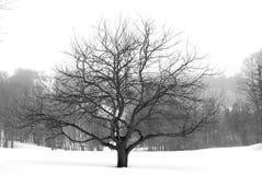 De boom van de appel in de winter royalty-vrije stock foto's