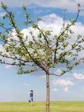 De boom van de appel met lopend meisje royalty-vrije stock foto's