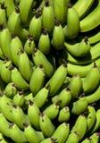 De Boom van de banaan Royalty-vrije Stock Foto