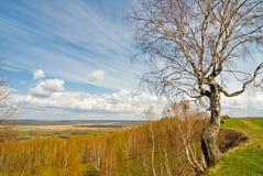 De boom van de berk op heuvel Stock Afbeelding