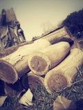 De boom van de besnoeiing stock fotografie