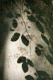 De boom van de beuk royalty-vrije stock afbeelding