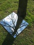 De boom van de bezinning Stock Afbeelding