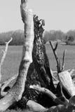 De boom van de bliksemstaking Stock Foto's