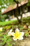 De boom van de bloemtempel Royalty-vrije Stock Foto's