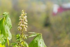 De boom van de bloesem Bloei op boom Roze en witte bloei op boom Royalty-vrije Stock Fotografie