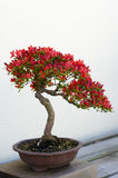 De Boom van de bonsai royalty-vrije stock afbeeldingen