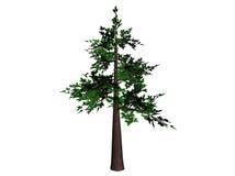 De Boom van de bonsai royalty-vrije illustratie