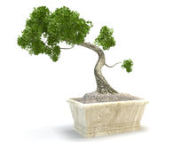 De boom van de bonsai vector illustratie