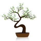 De boom van de bonsai op witte achtergrond Stock Afbeelding