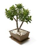 De boom van de bonsai - weinig struik Stock Foto's