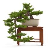 De boom van de bonsaipijnboom in een pot Stock Foto's