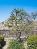 De boom van de cipresbonsai in het park Stock Foto