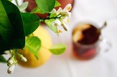 De boom van de citroen Royalty-vrije Stock Afbeeldingen