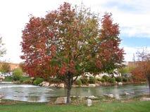 De boom van de dalingsherfst aan de kant van de stroomrivier Stock Foto's
