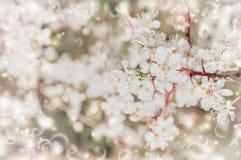 De boom van de de lentebloesem over bloemenaardachtergrond Stock Foto