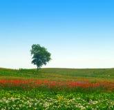 De boom van de eenzaamheid Stock Foto