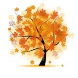 De boom van de esdoorn, de daling van het de herfstblad