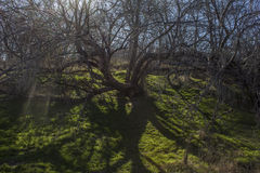 De boom van de fee Stock Foto's