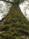 De boom van de fee royalty-vrije stock foto's