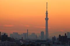 De Boom van de Hemel van Tokyo Stock Afbeeldingen