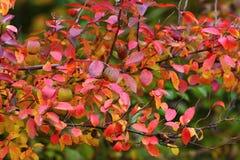 De boom van de herfst Stock Foto