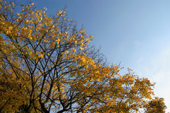 De boom van de herfst stock foto's