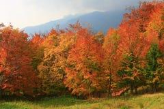 De boom van de herfst royalty-vrije stock afbeelding