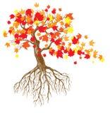 De boom van de herfst Royalty-vrije Stock Fotografie