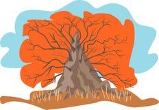 De boom van de herfst Royalty-vrije Stock Afbeeldingen