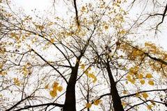 De boom van de herfst met gele bladeren vector illustratie