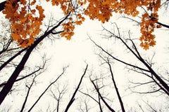 De boom van de herfst met gele bladeren royalty-vrije illustratie