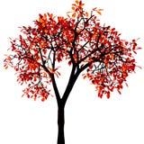 De boom van de herfst. Vector. Royalty-vrije Stock Afbeeldingen