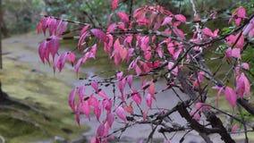 De boom van de herfst Vector beschikbare illustratie stock video