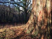 De boom van de herfst Vector beschikbare illustratie royalty-vrije stock fotografie
