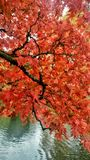 De boom van de herfst Vector beschikbare illustratie Stock Afbeeldingen