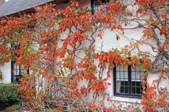 De boom van de het plattelandshuisjewijnstok van Kent stock foto's