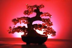 De boom van de jade Royalty-vrije Stock Afbeelding
