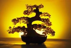 De boom van de jade Stock Afbeeldingen