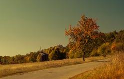 De boom van de kant van de weg Stock Afbeelding