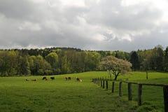 De boom van de kers in de lente, Duitsland Royalty-vrije Stock Foto's