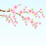 De Boom van de Kers van de Bloesem van Sakura royalty-vrije illustratie