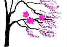 De boom van de kersenbloesem op witte achtergrond, Vectorillustratie Stock Foto