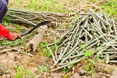 De boom van de landbouwers scherpe maniok royalty-vrije stock fotografie