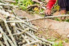 De boom van de landbouwers scherpe maniok royalty-vrije stock foto's