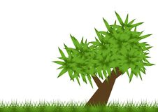 De boom van de lente Royalty-vrije Stock Foto's