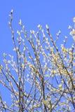 De Boom van de lente Royalty-vrije Stock Afbeelding