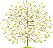 De boom van de lente Stock Afbeeldingen