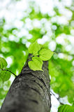 De boom van de lente, aardachtergrond stock foto
